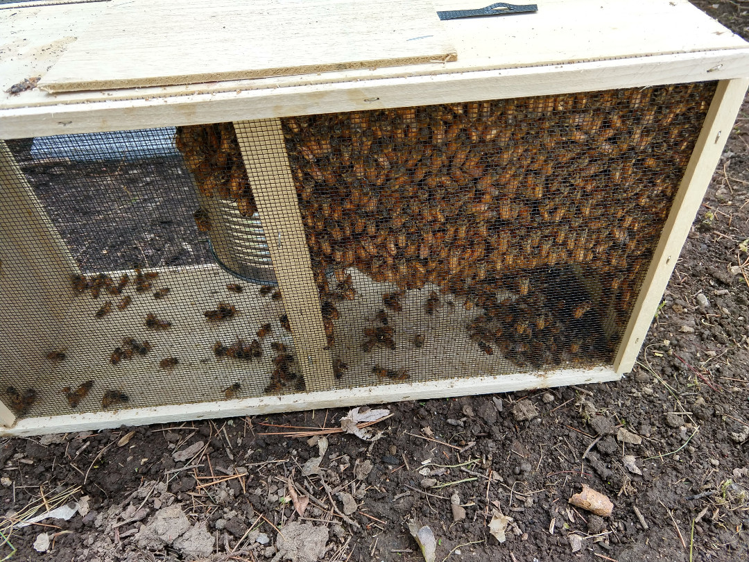 hive 1 bees pre install